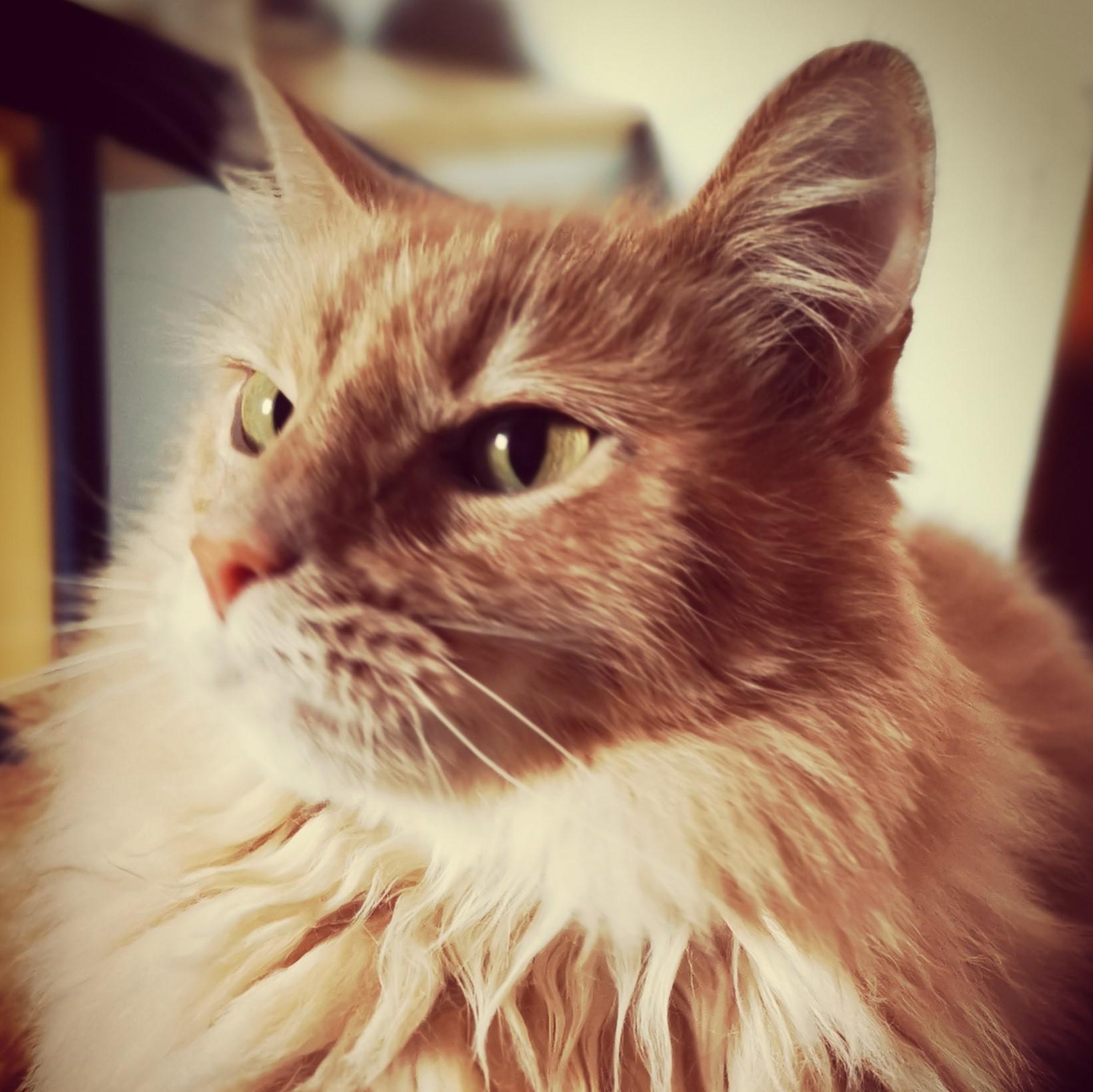 rote Katze Amis