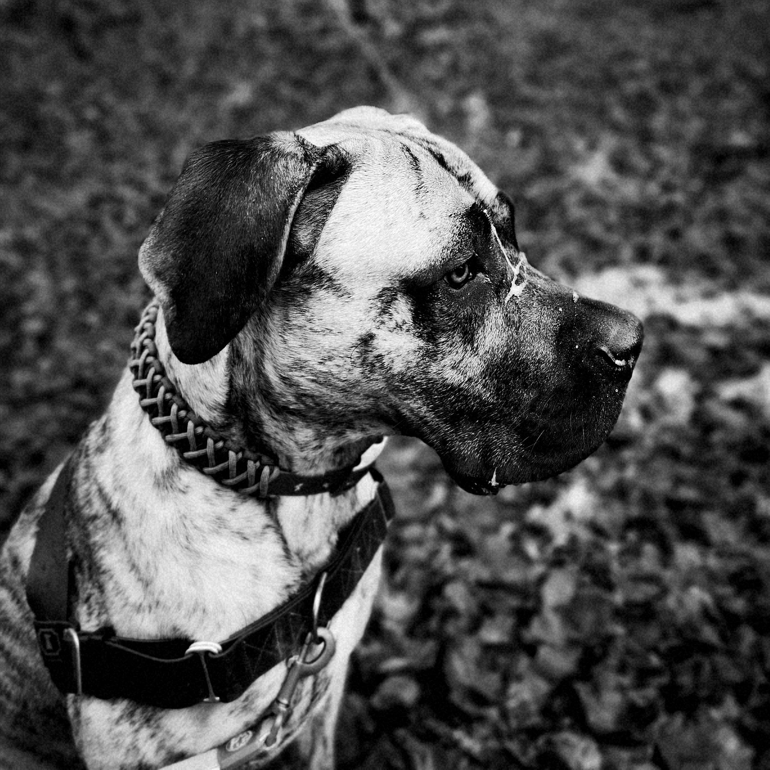 Odin Profil