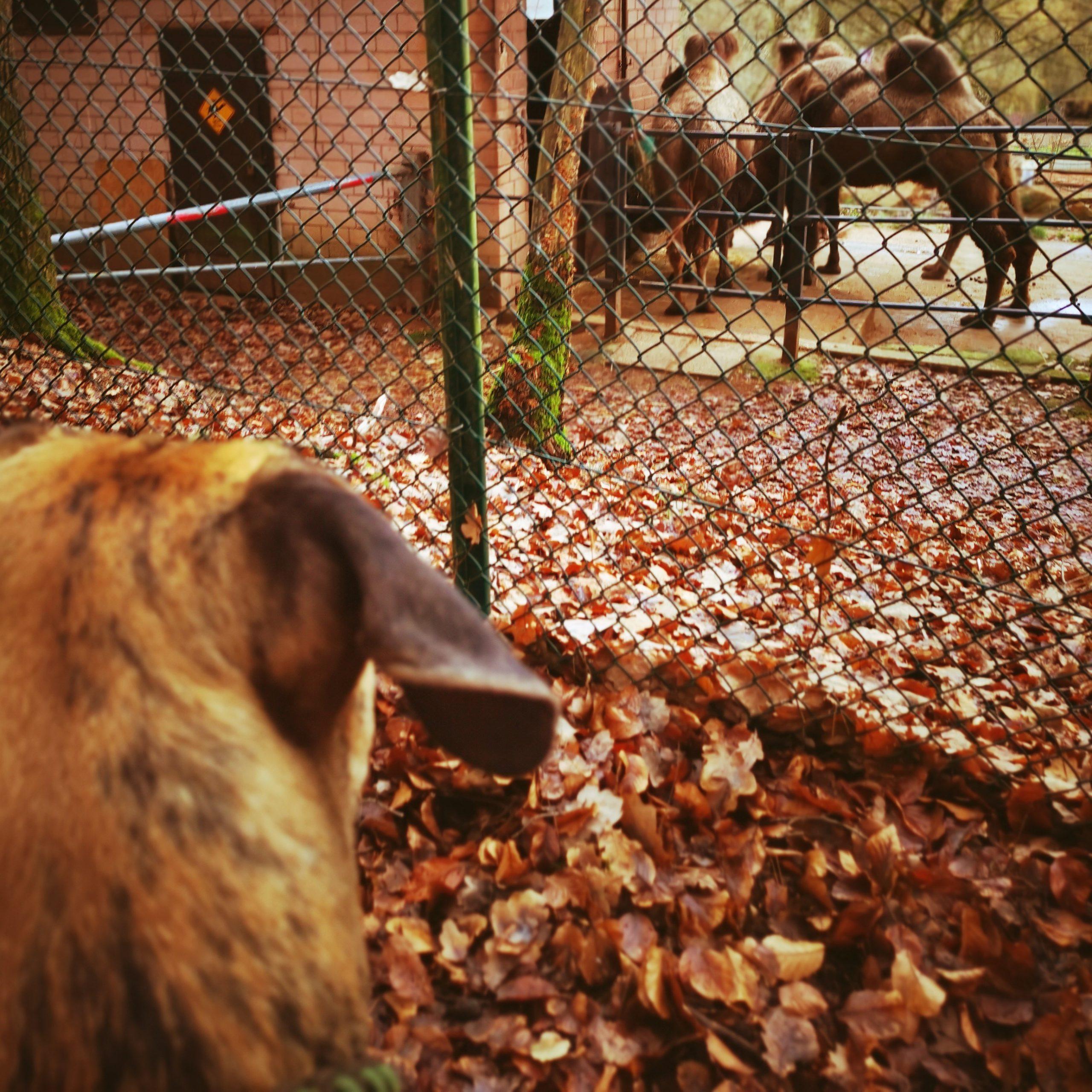 Odin Zoo